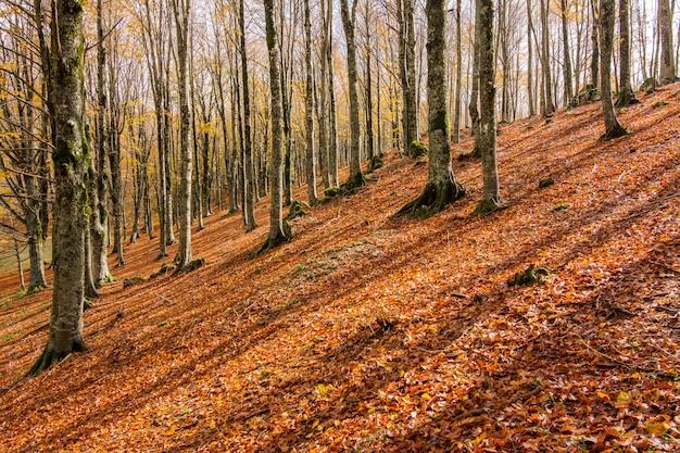 Feuillage dans le parc national de monti simbruini, latium, italie