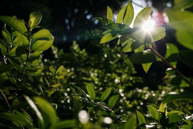 Feuillage dense de feuilles vertes éclairées par le soleil, fond de tons vert foncé.