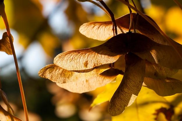 Feuillage d'érable à l'automne