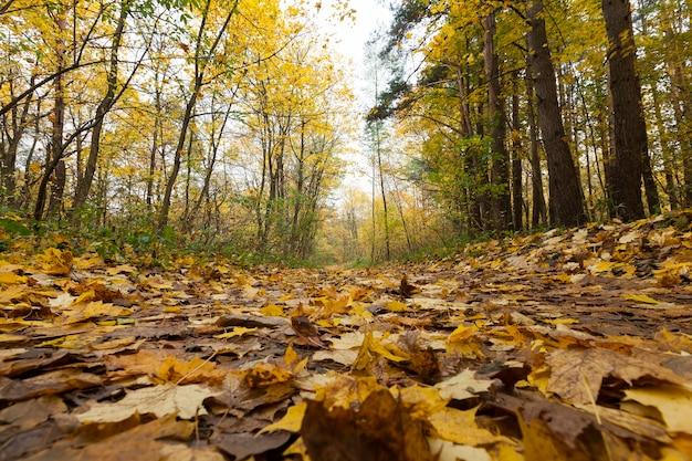 Feuillage d'érable à la chute des feuilles d'automne, érable avec gros plan de feuille rougissante changeante, belle nature avec érable sauvage