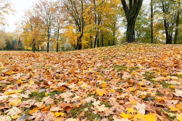 Feuillage d'érable jaune avec des arbres et de l'herbe verte sur le paysage d'automne, couleur terne par temps nuageux