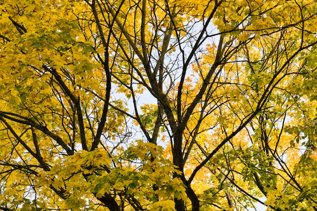 Feuillage jaune et autre sur les arbres au début de l'automne, arbres lumineux par temps ensoleillé