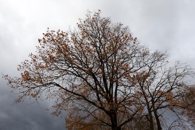 Feuillage jaune et orange sur les arbres en automne