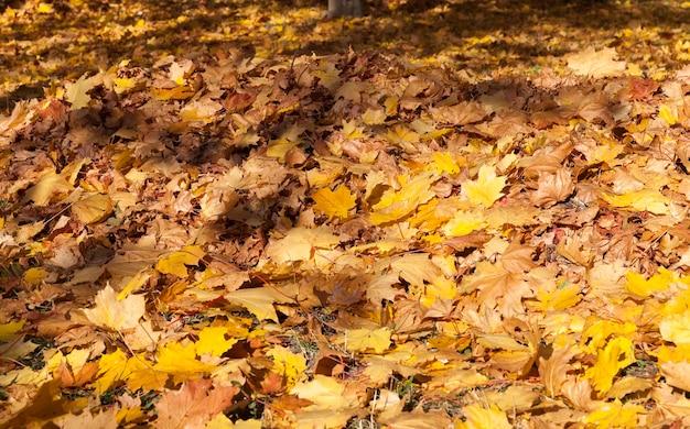 Feuillage orange et jaune des arbres sur terre, caractéristiques saisonnières dans le parc d'automne