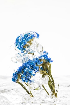 Feuillage persistant bleu tombant dans l'eau