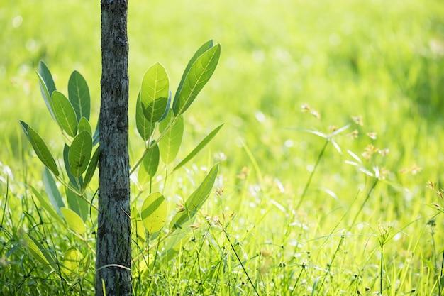 Feuillage vert avec fond naturel de bokeh
