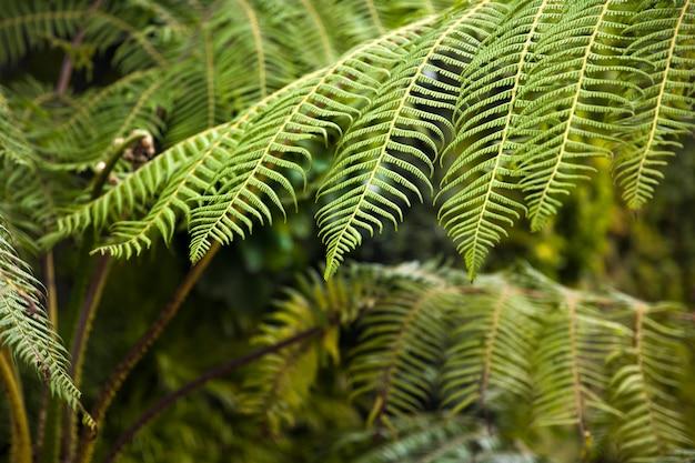 Feuillage vert fougères florales naturelles