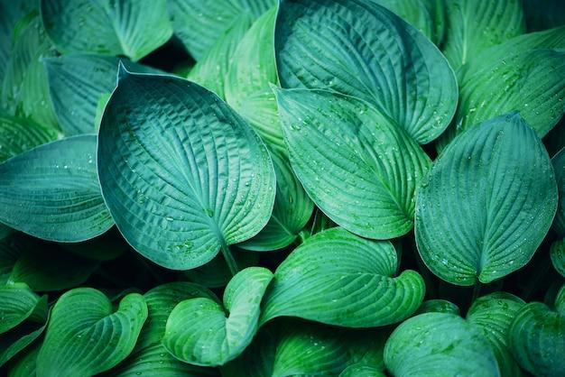 Feuillage vert frais. feuilles