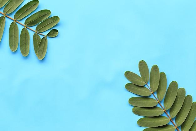 Feuillage vert frais sur fond de papier bleu.