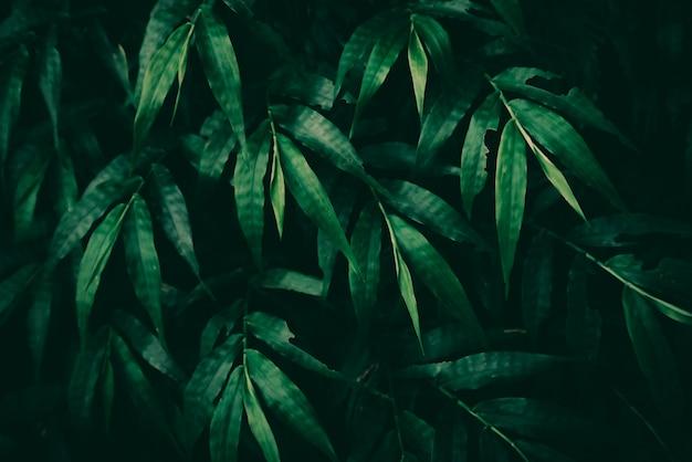 Feuillage vert luxuriant nature texture background en saison des pluies dans le concept de l'environnement