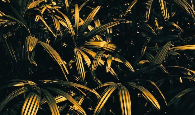 Feuille d'arbre abstrait en or background.nature concepts design.