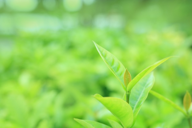 Feuille d'arbre vert sur fond flou dans le parc avec motif propre.