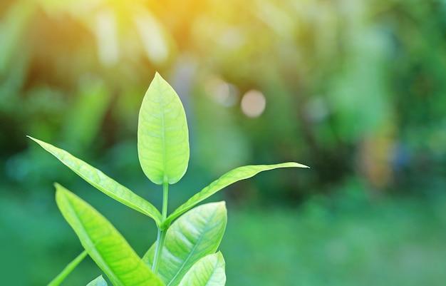 Feuille d'arbre vert jeune frais sur fond flou