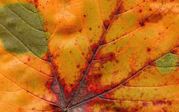 Feuille d'automne bouchent