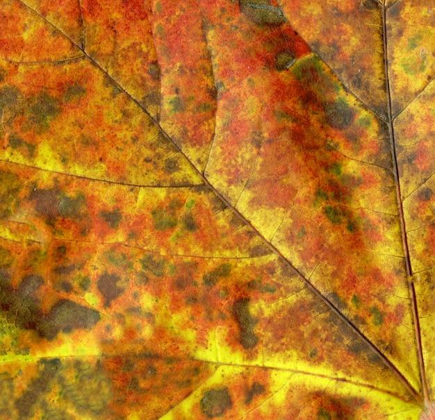 Feuille d'automne coloré