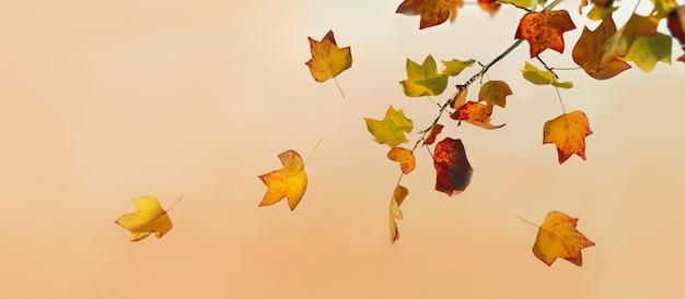 Feuille d'automne doré et brun d'un érable en vue panoramique sur fond orange