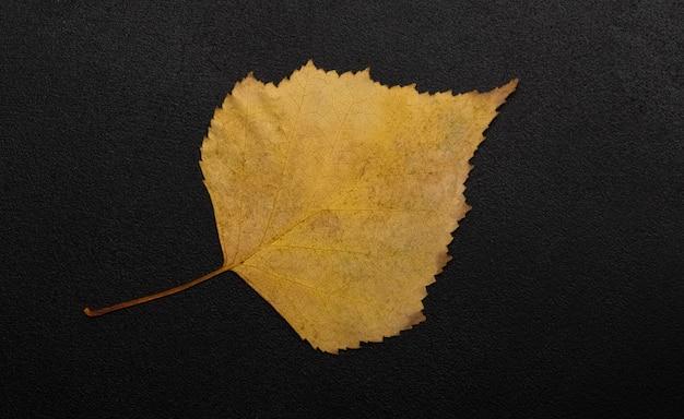 Une feuille d'automne sur fond noir avec un espace pour le texte. espace de copie