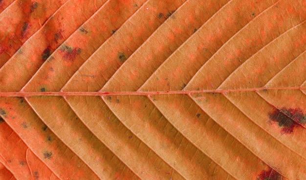 Feuille d'automne fond de texture. texture du feuillage d'automne