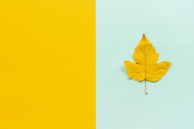 Feuille d'automne jaune sur fond jaune bleu