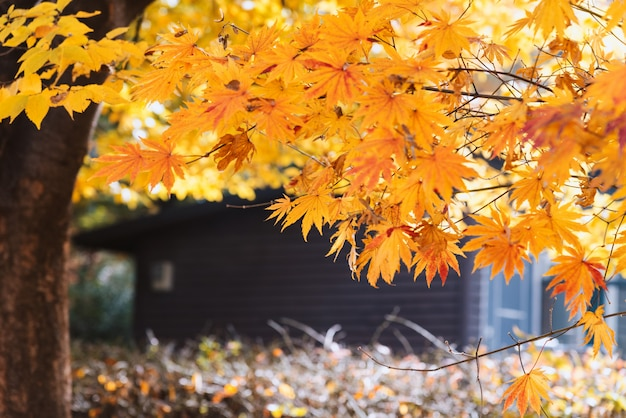 Feuille d'automne jaune et maison en bois floue