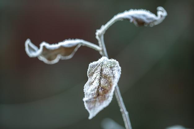 Feuille d'automne recouverte de cristaux de glace. tôt le matin pendant la saison froide.