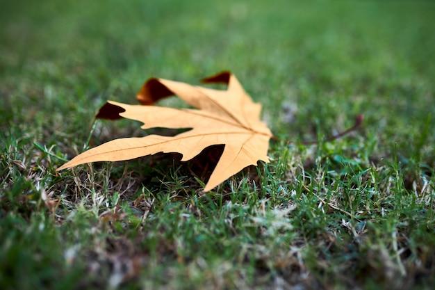 Feuille d'automne sec se trouve sur l'herbe verte comme le premier signe de l'automne prochain