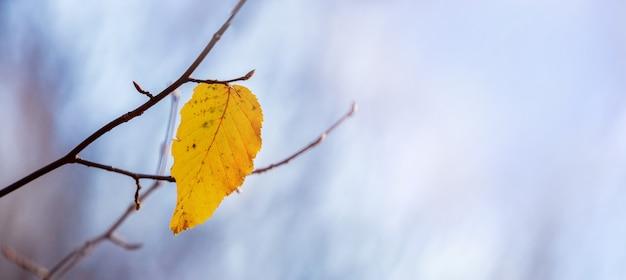 Feuille d'automne solitaire sur une branche d'arbre sur un fond de ciel bleu clair