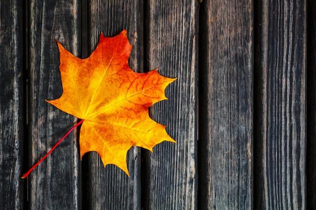 Une feuille d'automne solitaire se trouve sur un fond sombre.