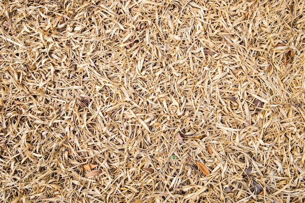 Feuille de bambou sec brun texturé