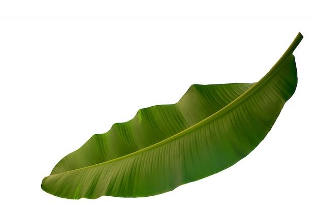 Feuille de banane fraîche isolée