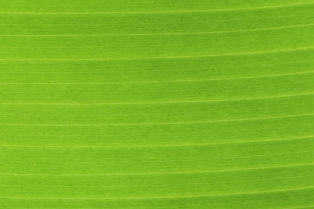 Feuille de bananier bouchent la texture.