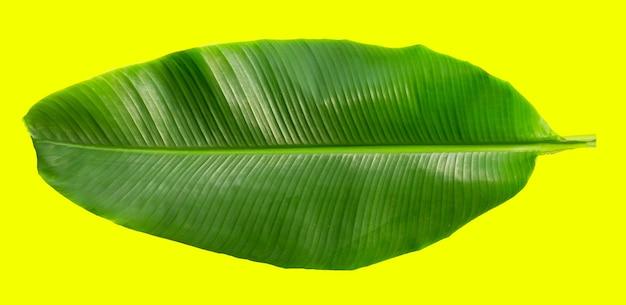 Feuille de bananier tropical sur surface jaune