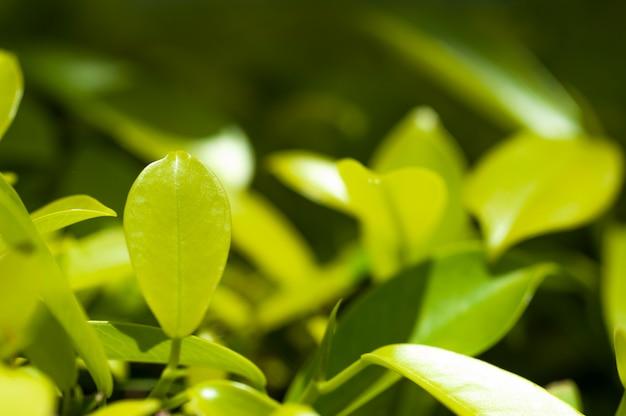 Feuille de beauté verte en arrière-plan flou