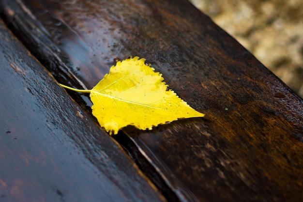 La feuille de bouleau jaune est allongée sur un banc en bois sombre et humide