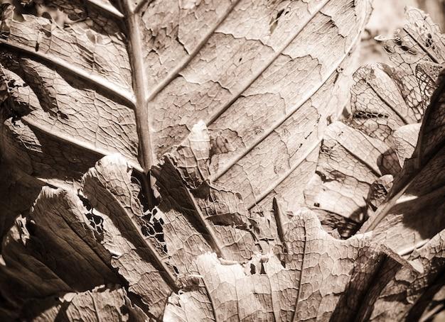 Feuille brune de désintégration sèche
