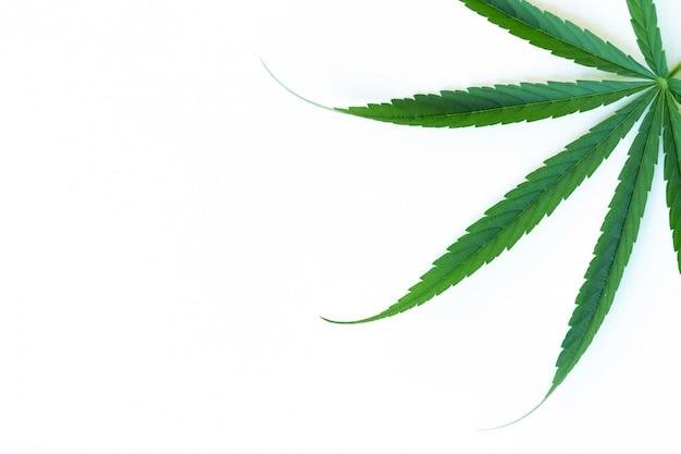 Feuille de cannabis, feuille de marijuana (bâton thaï) isolé sur blanc