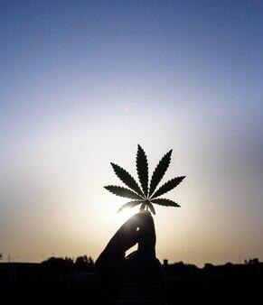 Feuille de chanvre de cannabis à la main. silhouette sombre sur fond d'aube.