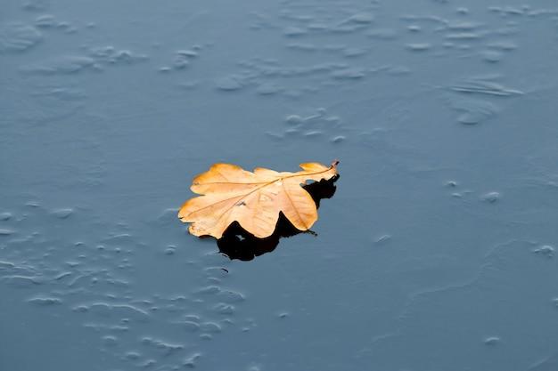 La feuille de chêne brune sèche se trouve sur la glace, les feuilles d'automne tombées