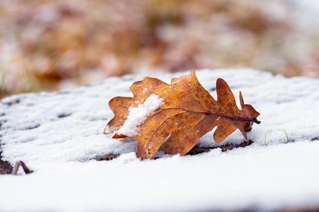 Feuille de chêne couverte de neige sur une souche couverte de neige, vue d'hiver