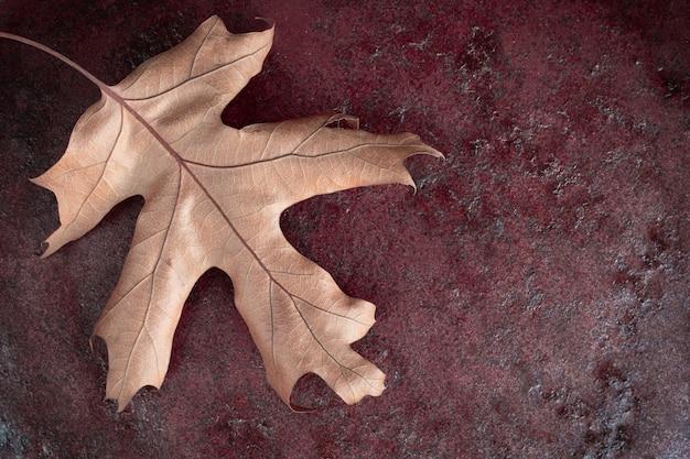 Feuille de chêne sec jaune quercus palustris sur fond rouge foncé. notion d'automne. espace de copie