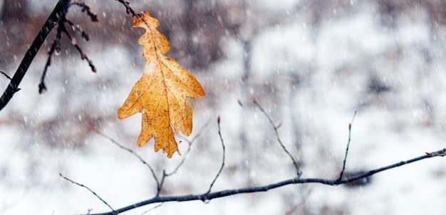 Feuille de chêne sèche dans la forêt sur un arbre lors d'une chute de neige