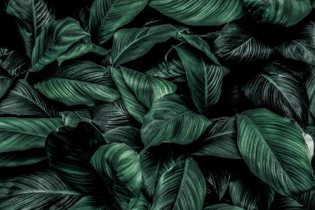 Feuille conservation de l'environnement mur de couleur verte caractéristique de construction mur d'enceinte