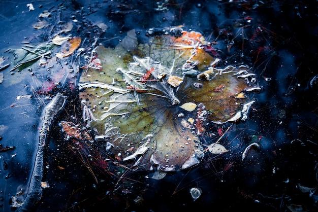 Feuille en décomposition dans le lac