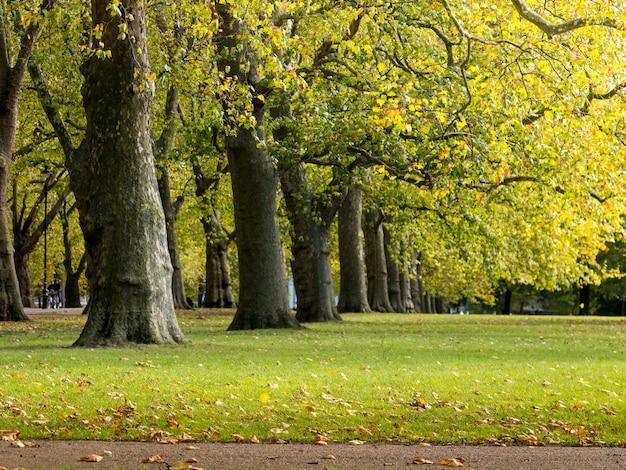 Feuille d'érable automne coloré vert et jaune sur un arbre