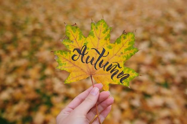 Feuille d'érable en automne parc avec mot calligraphique automne
