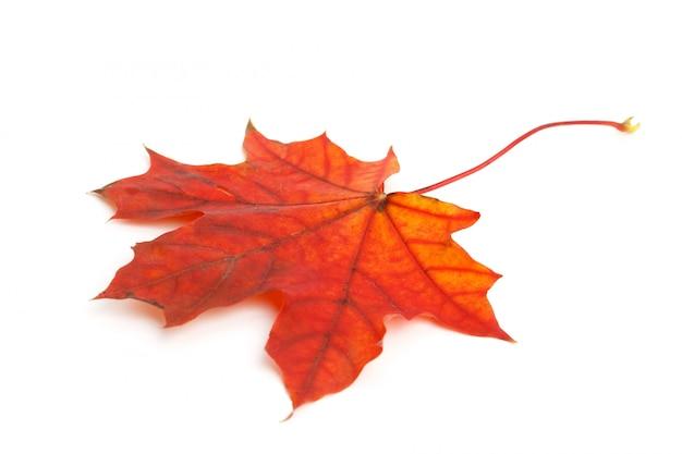 Feuille d'érable automne sec coloré