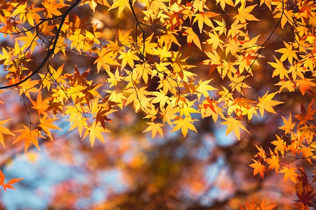 Feuille d'érable automne