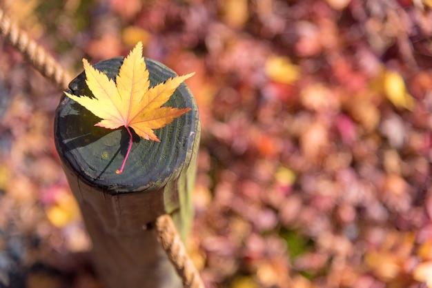 Feuille d'érable japonaise sur bois modèle backgroud en automne à kyoto, japon