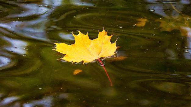 Feuille d'érable jaune flotte dans l'eau sombre