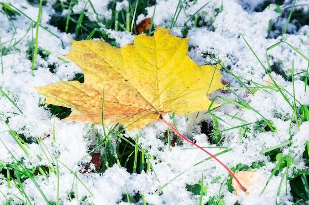 Feuille d'érable sur la neige